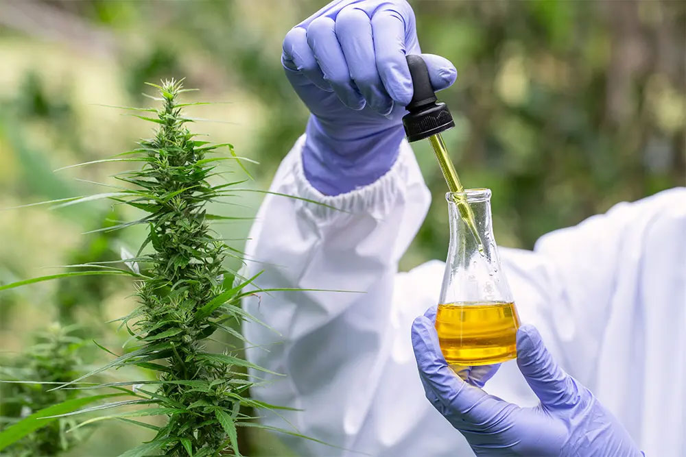 Read more about the article An Up-Close Look at the Value of Cannabis Extracts for Manufacturers